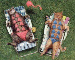 Katten vakantie