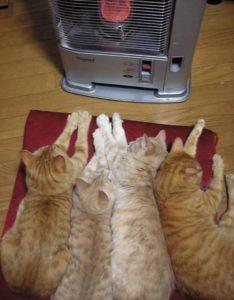 nieuwsbrief ikpasopjouwkat-milieu-kattenoppas-onzindelijkheid