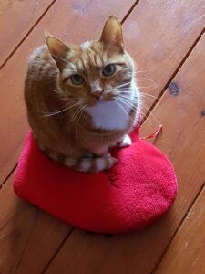 gedragsproblemen kat- Westerpark oppas- Havengebied kattenoppas
