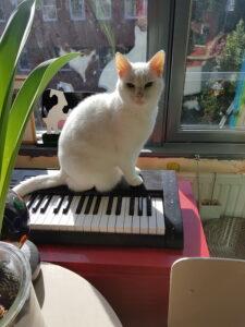 onzindelijkheid kat- petsitter Amsterdam- catsitter