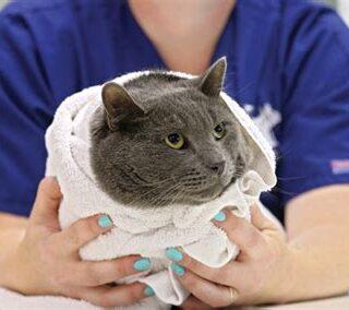 kat-medicijnen-pillen-geven