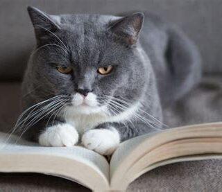 kat-boeken-kattenboek
