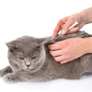 kat-vaccineren-titeren-alternatief